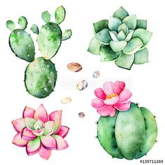 Watercolor collection with succulents plants,pebble stones,cactus.Handpainted iclipart isolated on white background.World of succulent and cactus collction.Perfect for your unique design,logo,patterns Royalty free image illustration Cactus Drawing, Cactus Painting, Plant Drawing, Cactus Art, Cactus Flower, Cactus Plants, Succulent Plants, Indoor Succulents, Cacti