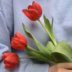 nice year for tulips Flower Aesthetic, Red Aesthetic, Aesthetic Pictures, My Flower, Beautiful Flowers, Foto Still, Image Originale, No Rain, Botany