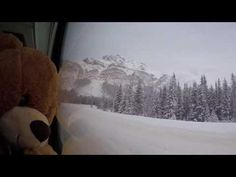 Day 2 Travel Teddy - Edmonton - YouTube