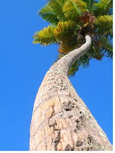 Under the Palm Tree - St. Croix, USVI