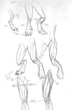how to draw dragon feet drawn dragon foot how to draw dragon feet step by step - Drawing Reference Poses, Drawing Poses, Drawing Sketches, Drawing Tips, Drawing Ideas, Feet Drawing, Furry Drawing, Animal Sketches, Animal Drawings
