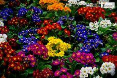 colorful garden wallpaper