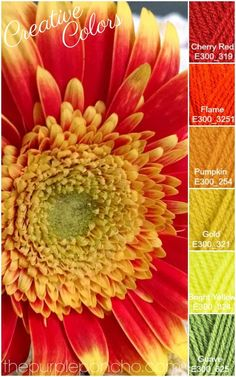 Creative Colors – Gerber Daisy – Fall Palette – The Purple Poncho! Get your color inspiration for your next craft project.