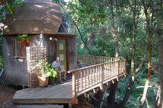 mushroom tree houses