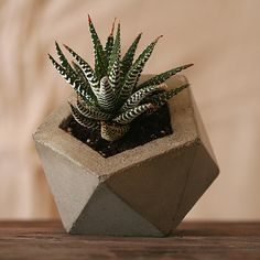 Concrete Planter Natural Gray  by Andrew Stuart