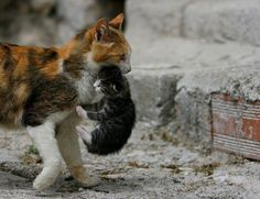 Kitty with a cat - 23 Photo (9)