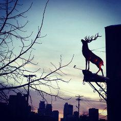 Red Stag #Minneapolis #Minnesota