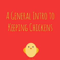Kickoff to Chicken Week on Mixed Bag Mama-A General Intro to Keeping Chickens