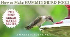 It's important to get the recipe just right to match the natural diet of hummingbirds. This is the standard sugar water recipe for home hummingbird feeders. Make Hummingbird Food, Hummingbird Nectar, Hummingbird Garden, Sugar Water For Hummingbirds, How To Attract Hummingbirds, Humming Bird Feeders, Humming Birds, Nectar Recipe, Water Recipes