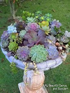 Another succulent arrangement in a birdbath.