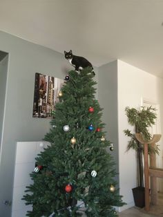 Kitty wanted to help decorate the tree. http://ift.tt/2zpe2ls