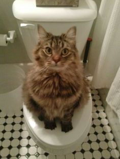 Excuse me! Reference to a different cat pin on the toilet