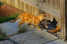 cute kittens photos1 - kittens playing #kittens #cutekittens #cats