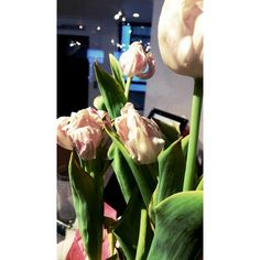 Wilted tulips. By Chloe M.