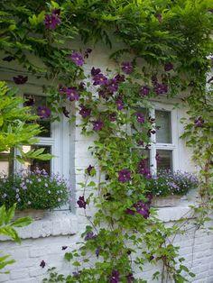 Flores Na Janela!por Depósito Santa Mariah