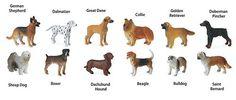 Safari Ltd.Dogs Toob Key