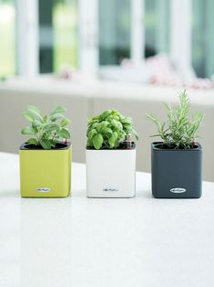 These have to be the tiniest, cutest self-watering containers I've seen. Herb Planter - Mini Cube Self-Watering Herb Planter - Indoor Herbs Herb Planters, Herb Pots, Indoor Planters, Planter Pots, Indoor Herbs, Potted Herbs, Fresh Herbs, Self Watering Containers, Self Watering Planter