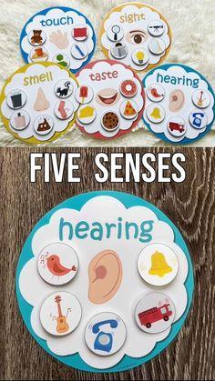 Five Senses Sorting Activity, Learn 5 Sense, Preschool Activity, Toddler Busy Bag, PreK Homeschool