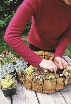 learn how to make a succulent wreath crafts flowers gardening succulents wreaths After you fill the wreath form with sand and potting soil you will reassemble the wreath.