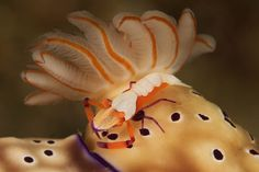 Tips on Shooting Nudibranchs – Underwater Photography Made Simple