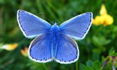 The big butterfly count 2015 – in pictures