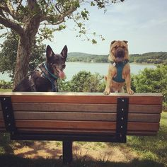 Whether you're thinking about renting a pet friendly motorhome for a family vacation, or considering buying an RV to make traveling with your furry family members easier, rest assured you won't be alone. According to the Recreational Vehicle Industry Association'sspring survey (completed in April), 61% of RV owners travel with pets! There's nothing better for …
