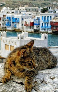 Cat's View of Little Venice ~ Mykonos Island, Greece | by Yasmine DG on 500px