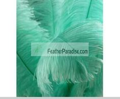 Mint Green Ostrich Feather/Plume 22-24 inch Sanitized and Hand-sorted 12 Pieces