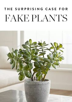 Whether you're working with minimal natural light, or travel often, or have a black thumb, here are your best options for faux plants that look surprisingly real.
