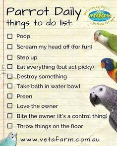 Training Your Pet Parrot Parrot Pet, Parrot Toys, Parrot Bird, Caique Parrot, Pretty Birds, Beautiful Birds, Funny Parrots, African Grey Parrot, Crazy Bird