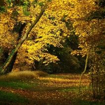 Fall Prey to the Change of Seasons: 5 Novels to Keep You Awake All Night - Alibris Heart Pictures, Fall Pictures, Heart Pics, Photos Hd, Image Nature, Wonderful Picture, Autumn Leaves, Fallen Leaves, Landscape Photos