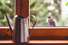 … Bird Feeders, Gallery, Outdoor Decor, Home Decor, Decoration Home, Roof Rack, Room Decor, Home Interior Design, Home Decoration