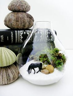 Just about as awesome as Oko Konia browbands! Wild Horse Terrarium Beach Scene Gift for Him by DoodleBirdie, $36.00