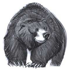 Character Design from Brother Bear