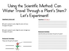 Celery Experiment   Celery, Worksheets and School