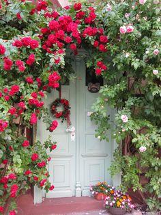 beautiful flowers -  roses door garden
