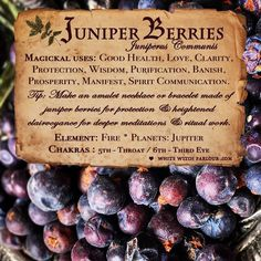 Magical Uses Of - Juniper Berries Magic Herbs, Herbal Magic, Plant Magic, Witch Herbs, Kitchen Witchery, Deep Meditation, Juniper Berry, Practical Magic, Healing Herbs