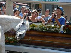 Animais Sensacionais » Cavalo se despede de seu dono em velório e comove familiares e amigos