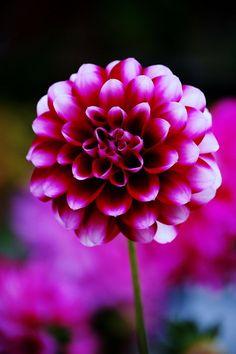 Flower by ~jordanjellybean on deviantART