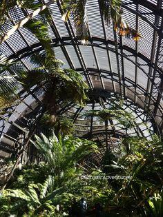 Inside the Botanic Garden in Balboa Park.