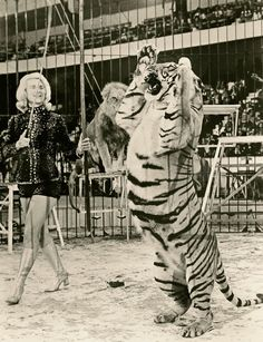Eloise Berchtold Circus Tiger Act. please stop the abuse of circus animals by boycotting current circuses that use animals in their acts Old Circus, Circus Acts, Circus Pictures, Old Pictures, Circus Photography, Vintage Photography, Vintage Circus Photos, Lion Tamer, Circo Vintage