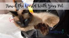 Travel the World with Your Pet | Easyology Pets