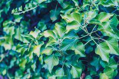 Plant Leaves, Child, Nature, Flowers, Plants, Photos, Image, Boys, Naturaleza