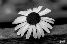 B&W Beauty by Maurizio Di Renzo on Flora, Black And White, Beauty, Collection, Black White, Blanco Y Negro, Black N White, Plants, Beauty Illustration