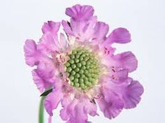 Image result for flowers