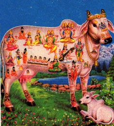 """Kamadhenu is the sacred of Hindu mythology. She is the divine bovine-goddess described a miraculous """"cow of plenty"""" who provides her owner whatever he desires. She is protector of the Brahmin—who are prohibited to fight. As a goddess, she becomes a warrior, creating armies to protect her master and herself."""