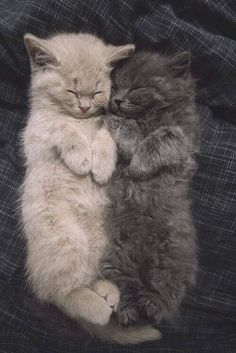 Two kittens sleeping on their backs #cute #adorable #kittens #cats