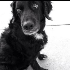 Most beautiful dog in the world