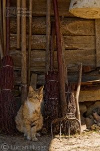 Cat is keeping the mice out of the barn..