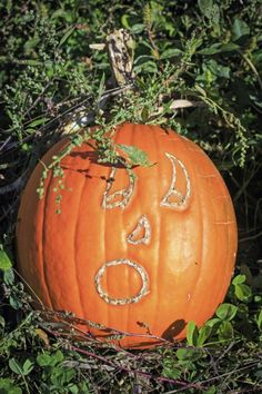 Scratching Names In Garden Veggies: How To Make Personalized Pumpkins And Squash - Gardening isn't all work, and there are a myriad of garden projects that you can engage your kids in that are just plain fun. An interesting project for kids is scratching names in garden veggies. Read this article to learn about personalizing pumpkins.